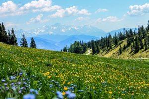 Almwiese, Bestattungsarten, Naturbestattung